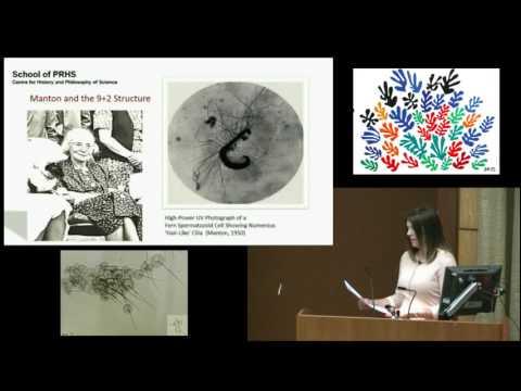 Lecture16: Irene Manton Slides