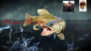Зимняя рыбалка на Ишиме Максимовка
