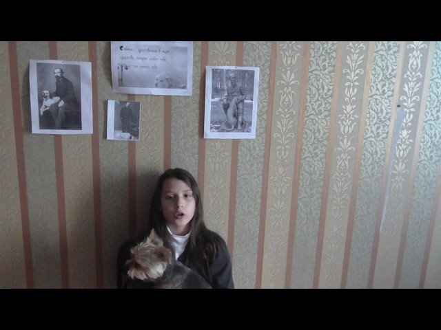 Изображение предпросмотра прочтения – ольгаданилова читает произведение «О собаках» Н.А.Некрасова