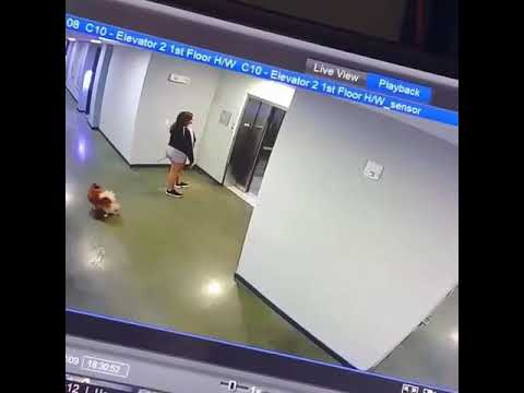 Tanner and Drew - Man Saves Dog With Leash Caught In Elevator