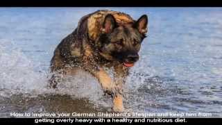 Puppy Training German Shepherd Guide