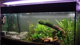 Как закрепить растения в аквариуме! Крепление аквариумных растений, мхов к  корягам, камням!