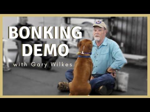 Training | Gary Wilkes Bonking Demo | Solid K9 Training Dog Training