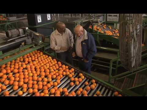 California Oranges: America's Heartland