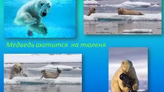 """Презентация """"Путешествие на северный полюс. В гости к белому медведю"""""""