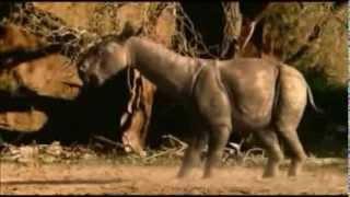 Oligocène 25Ma baluchithère chalicothère entélodon hyaenodon
