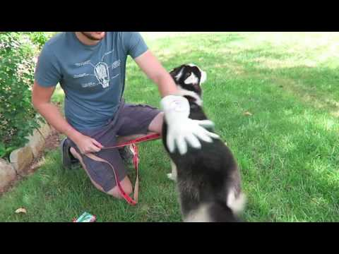 7 Dog Gadgets Put To The Test. Very Funny!
