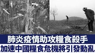 疫情加速糧食危機? 大陸多地砍樹種糧|新唐人亞太電視|20200330