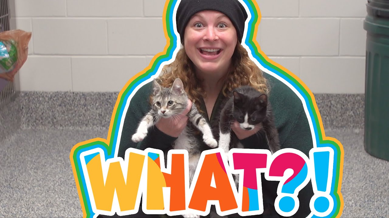I Can Be What?! | Veterinarian