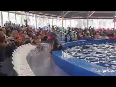 Дельфинарий в Парке им. 1 мая, Нижний Новгород