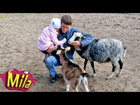 Ферма Домашних Животных 🐖🐓🐑🐏 Контактный ЗООПАРК для Детей 🐇🐥🐎 Кормим Страусов 🐃🐔🐐