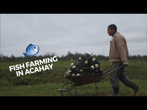 Faces2Hearts In PARAGUAY: Fish Farming In Acahay