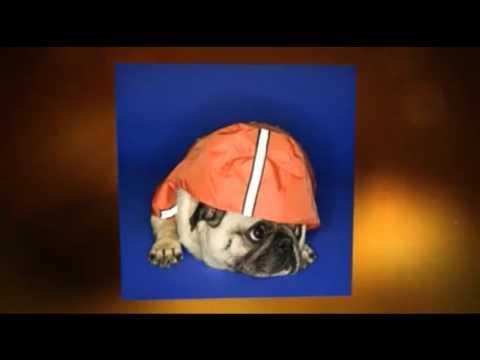 Cheap Dog Insurance