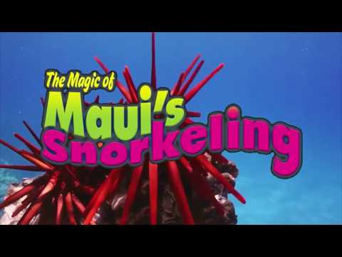 Magic of Maui's Snorkeling