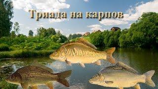 Русская Рыбалка 3.99 Триада на карпа на Рыбхозе.