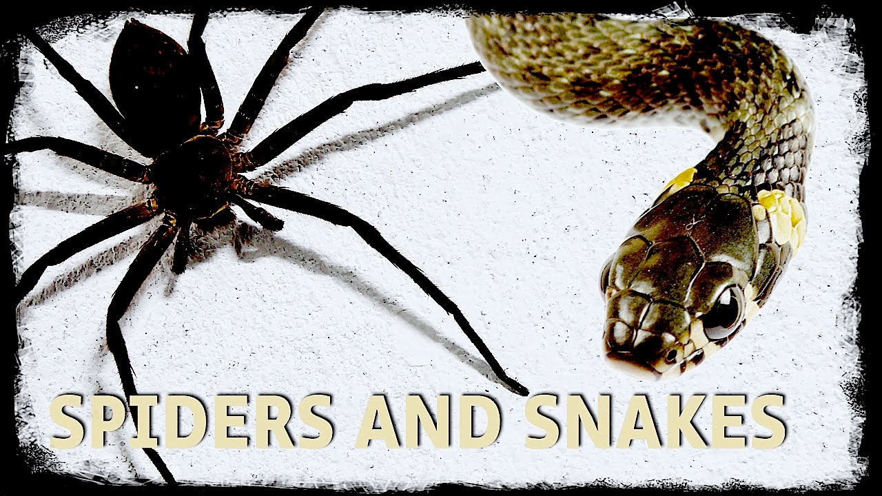 top 13 scary fear of spiders and snakes youtube