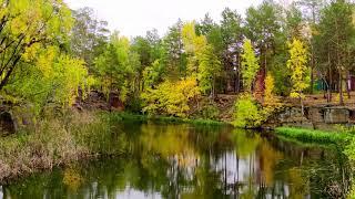 Челябинск. Золотое осеннее танго. Живая природа лесов и парков.  27. 09. 2021г.