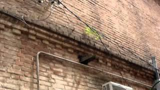 Беспредел ЖКХ г.Краснодар(, 2011-06-05T11:12:50.000Z)