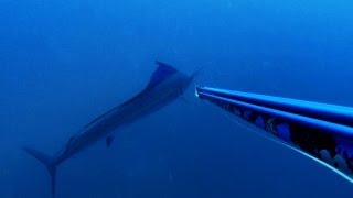 Rob Allen Spearfishing - Mozam Magic