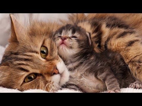 mom-cat-loves-her-baby-kittens-very-much