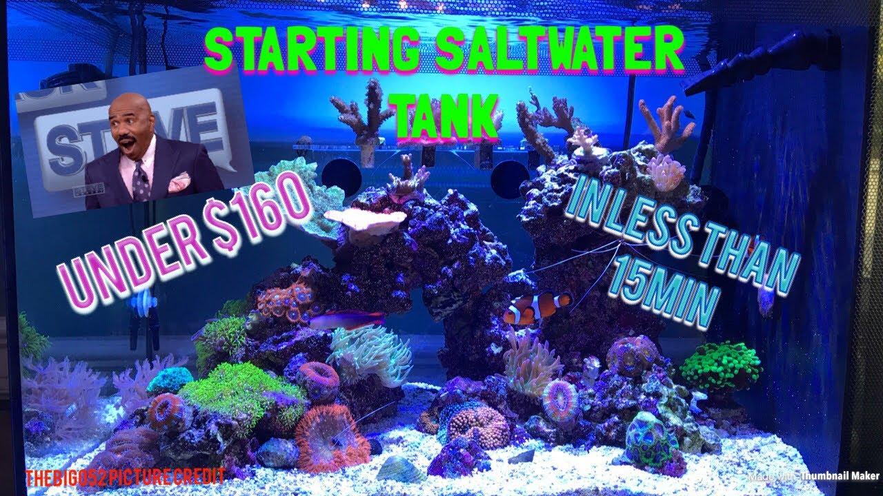 setting up saltwater tank under 160 fluval evo 13 5 youtube