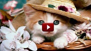 Милые котята / тест на просмотры