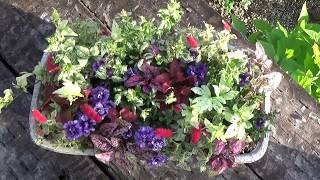 小輪八重咲ペチュニア、リトルホリデーの寄せ植え Mini Planter with Cute Small Petunia Hybrida thumbnail