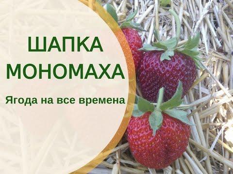 Шапка Мономаха