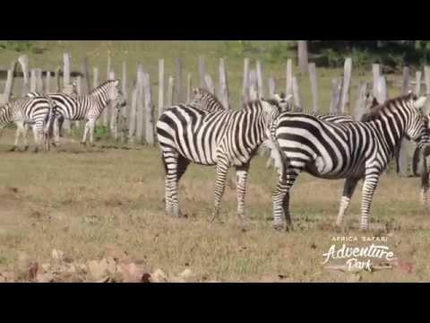 Esto es África Safari Costa Rica