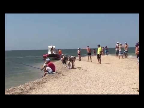 Должанская отзыв, описание, цены 2016 (Азовское море)