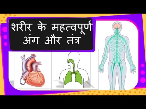 Science - Human  Organs and Systems and their functions - Hindi