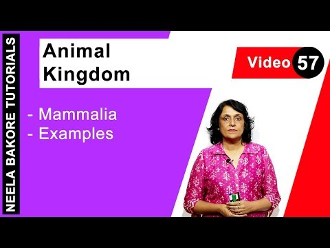 Biology For NEET & AIIMS | Animal Kingdom - Mammalia - Examples