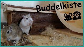 Rennmäuse in der Buddelkiste ♡ | My Gerbils