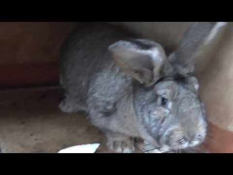 Небольшой обзор мини кролика фермы.