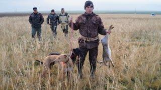 II Ставропольские краевые состязания собак борзых пород по зайцу русаку 2016г  фотоотчет