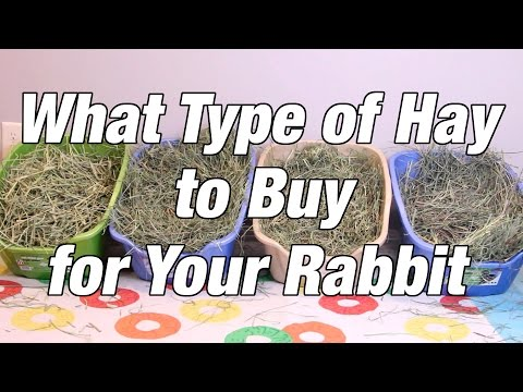 What Type of Hay to Buy for Your Rabbit