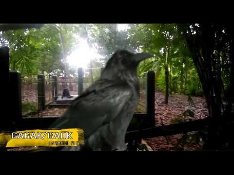 5 Jenis Burung yang Sudah Hilang/Punah