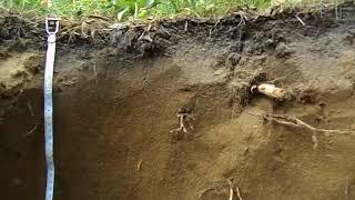 Клещевка Дерново-подзолистая почва на склоне коренного берега 2018