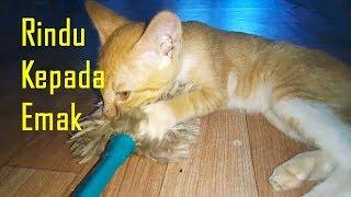 Sedih Campur Lucu, Kucing Merindukan Emak