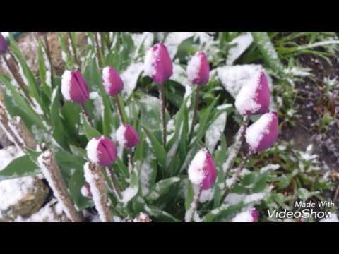 Снег в апреле(часть первая).