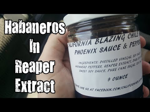 Habaneros In Reaper Extract (California Blazing Chile Farms) w/ KBDProductionsTV