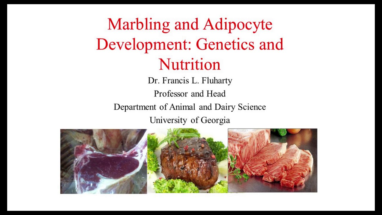 Marbling in Beef Cattle, the Result of Genetics and Proper Nutrition