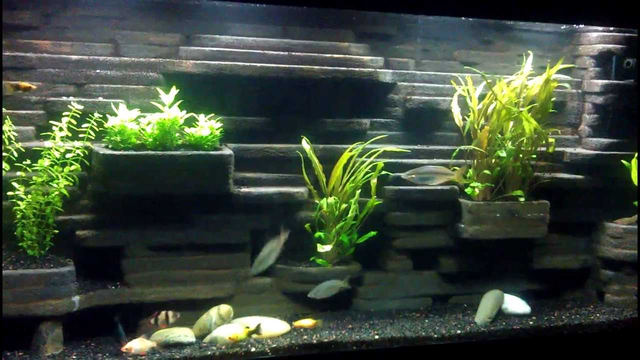 55 Gallon Aquarium Background 1000 Aquarium Ideas