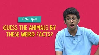 Can You Guess The Animals By Their Weird Facts? | Ok Tested