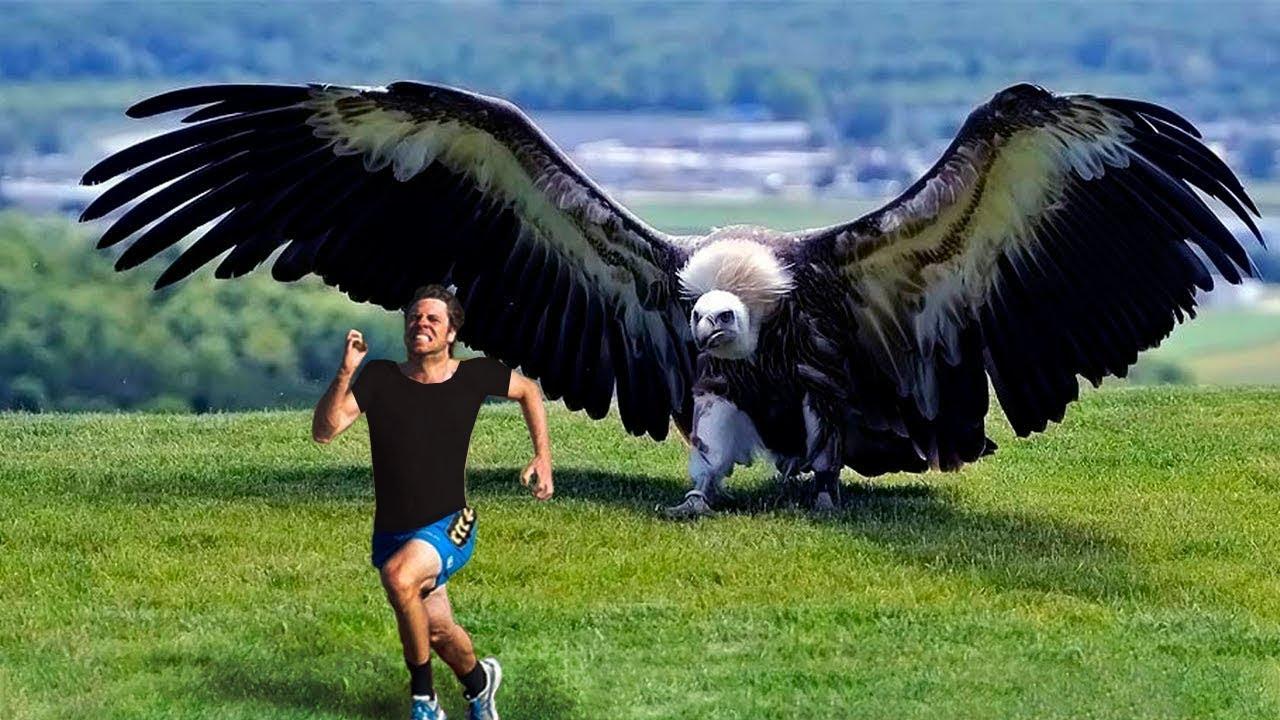 أكبر 7 طيور في العالم لن تصدق انها موجودة Youtube
