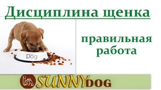 Лидерство. контроль. Воспитание - учим щенка не выбивать миску из рук(Бесплатный курс по дрессировки = http://sunny.dog/ - пошаговые бесплатные уроки по воспитанию и дрессировке вашей..., 2016-07-25T11:42:40.000Z)