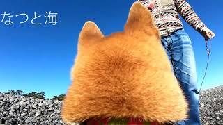 GoProを載せて犬目線で撮影してみたら… 激し過ぎて酔いました。