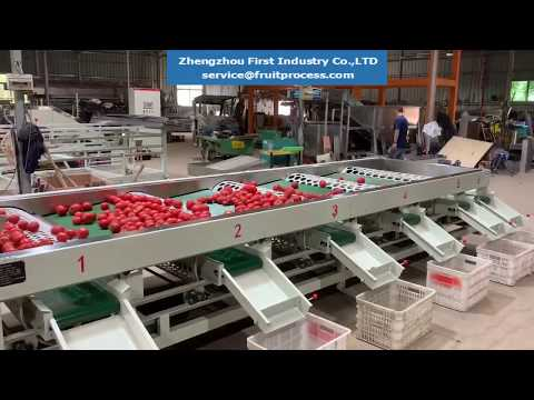 Tomato Sizing Machine, Tomato Grader