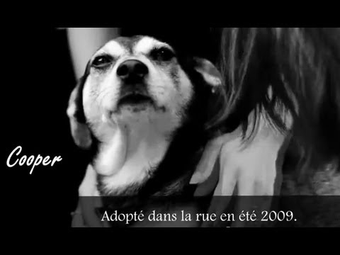 """""""Juste un Chien"""". """"Just A dog"""". (New english subtitles)."""