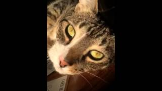 Kitty porn.